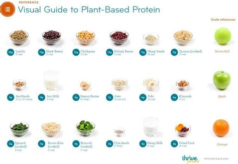 p protein in plants carbon corpus a guide to plant based protein