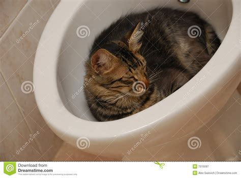 Nose Bidet On The Rest Royalty Free Stock Photography Image 7515597