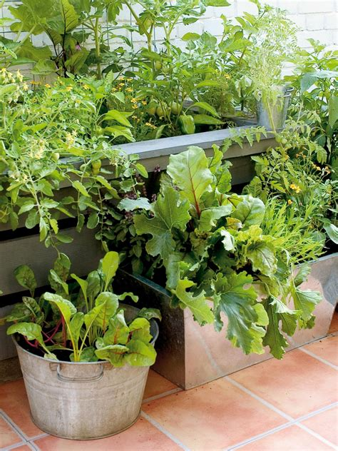 Growing Vegetables In Containers Diy Vegetable Gardening In Containers
