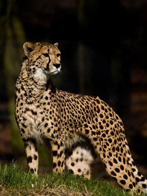 list  fauna  sudan  south sudan wikipedia