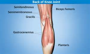Pain In Back Of Knee After Knee Replacement Surgery by Knee Joint Tendonitis Types Symptoms Treatment