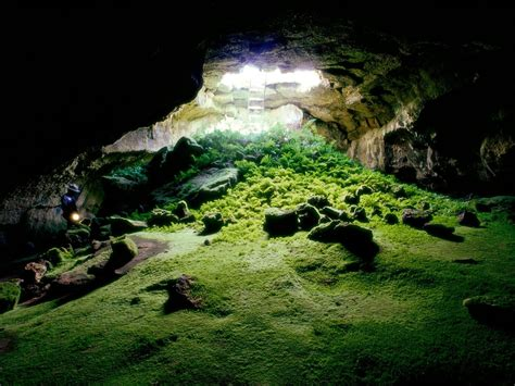 cave plants cave nature moss rock sunlight ladders plants