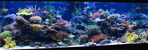 live rock aquascape designs aesthetics of aquascaping iii building the backbone of an aquascape reefs com