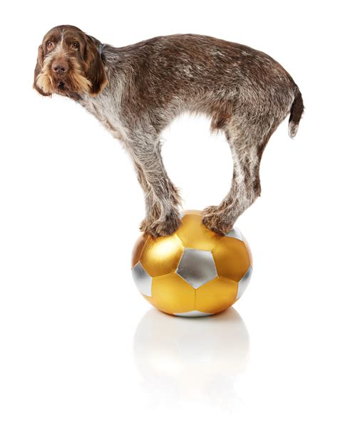 tricks to teach dogs tricks to teach your nashville k 9