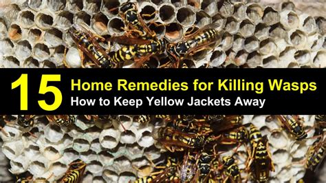 8 Tips On Getting Rid Of Yellow Jackets by How To Keep Yellow Jackets Away From Your Home 15 Home