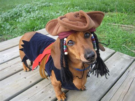 weiner costumes best 25 dachshund costume ideas on weiner costume dachshund
