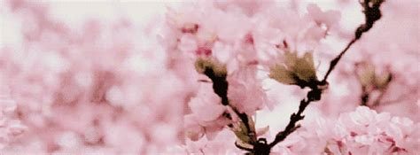 pretty gifts nature gif find on giphy