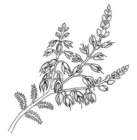 heather flower tattoo designs calluna flower stem to embroider embroidery