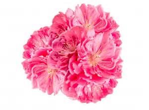 boutineer flowers pink flower photo free