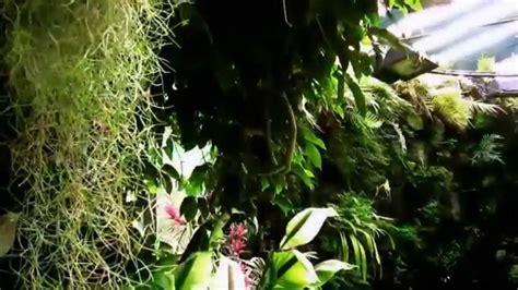 giardino la mortella i giardini la mortella ischia