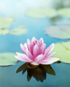 The Lotus Blossom Integral Studies Sri Aurobindo And The Lotus