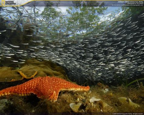 imagenes increibles national geographic national geographic extreme earth descargar