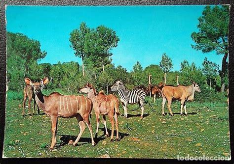 imagenes libres animales safari ruhe mallorca animales libres foto c comprar