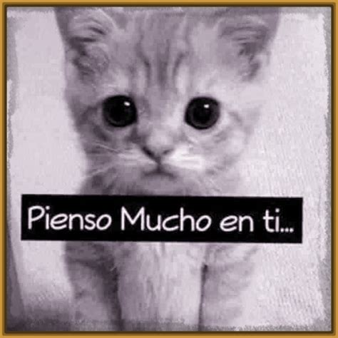 imagenes tiernas de gatitos con frases de amor tiernas frases de amor con gatitos gatitos tiernos