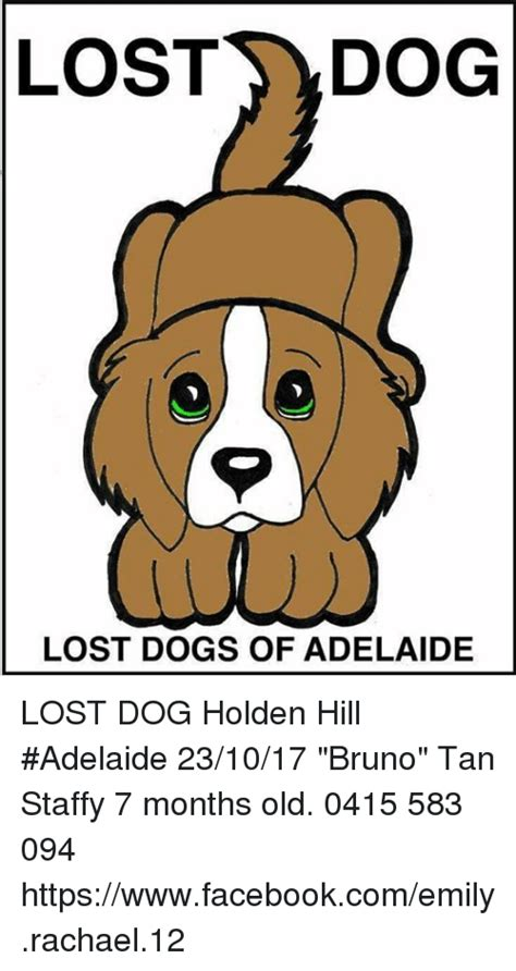 Lost Dog Meme - lost dog lost dogs of adelaide lost dog holden hill