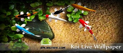 koi live wallpaper full version apk download apk mania full 187 koi live wallpaper v1 9 apk