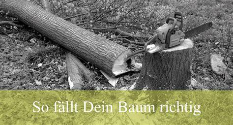 richtig baum fällen 4258 baum f 228 llen baum f llen baum f llen eine anleitung