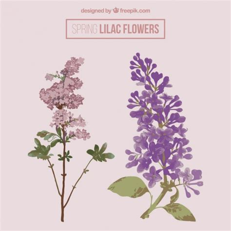 imagenes de rosas lilas bonitas flores lilas descargar vectores gratis