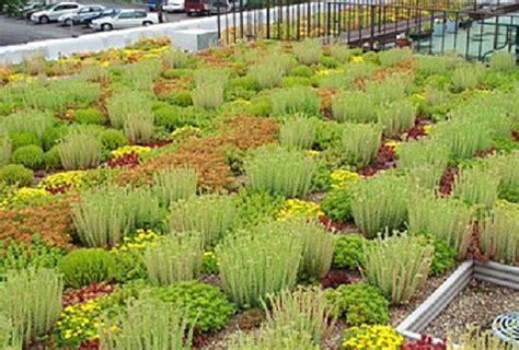 piante per giardini pensili realizzazione giardini pensili monza brianza