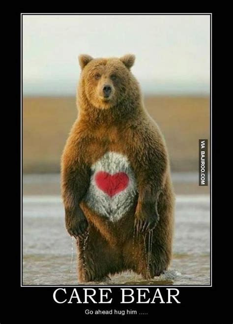 Funny Bear Meme - 19 best images about funny bears on pinterest animal