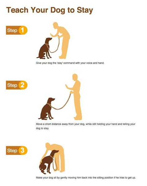 How To Teach Your To Stay The by Best Methods Dogs