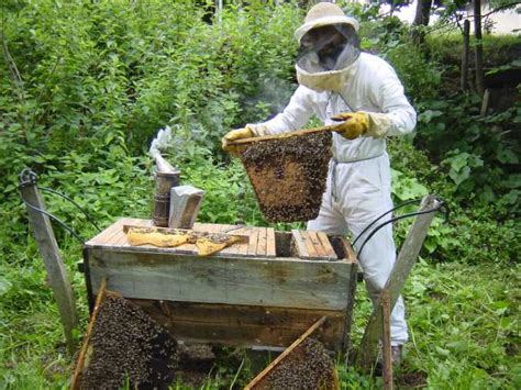 beekeeping top bar hive chop wood carry water plant seeds low cost pesticide