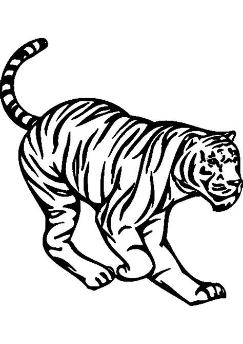 dessin 192 imprimer prefix de tigre blanc