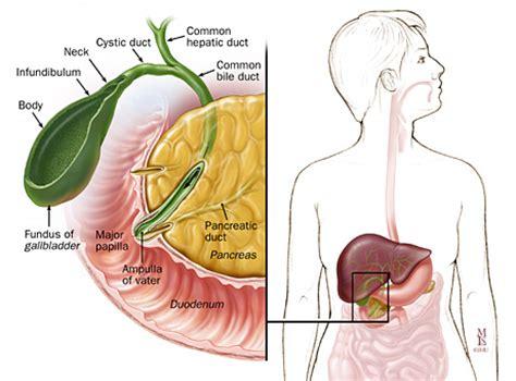 fundus of gallbladder gallstone disease anatomy