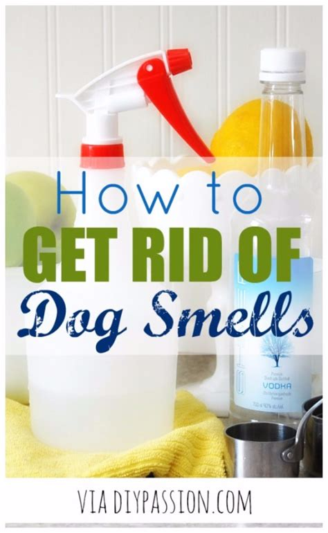 How To Get Throw Up Smell Out Of by 50 Best Diy Hacks For The New Year Diy