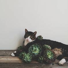 1000 images about cats on pinterest kitty cat lady and