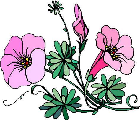 clipart fiore dafne