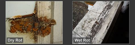 buying a house with dry rot timber treatment worcester woodworm dry rot wet rot beetle infestations