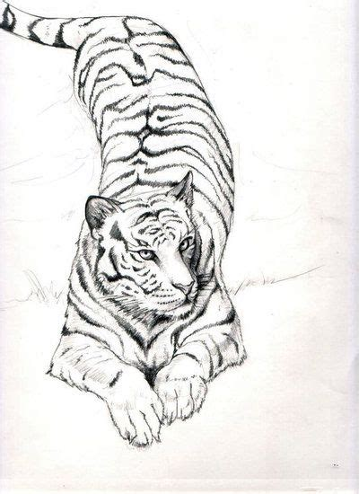 tiger tattoo tumblr tiger tiger by abarartproject