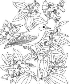 hawaii coloring pages hawaii coloring pages coloring home