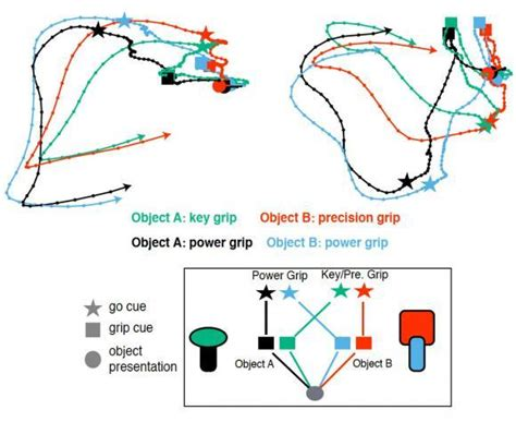 pattern analysis task in neural network grasping how the brain plans gripping motion science 2 0