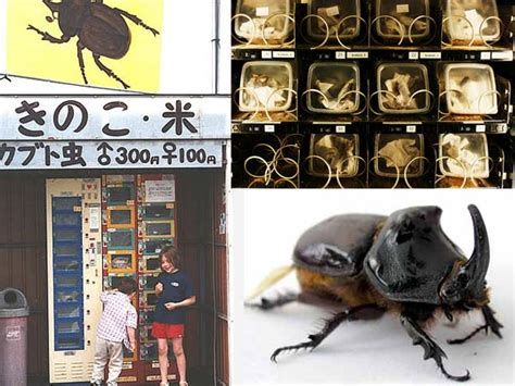 bed bug machine 10 weird vending machines the list cafe top 5