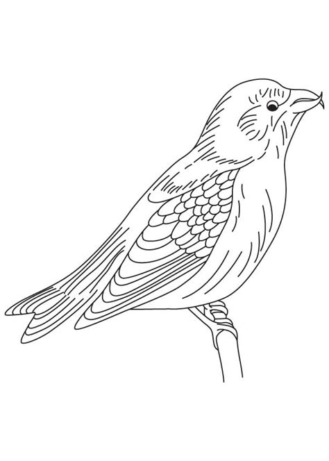 blackbird jet coloring pages blackbird coloring pages