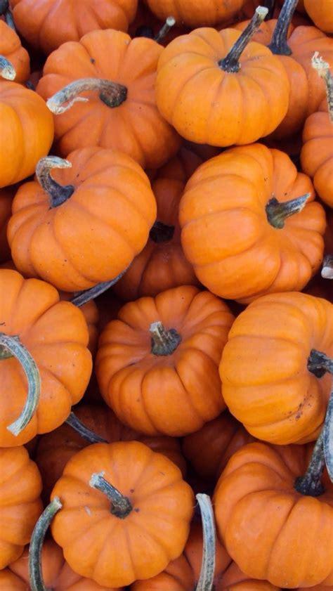 pumpkin background best 25 fall wallpaper ideas on iphone
