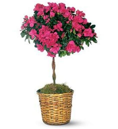 indoor flowering plants http www 1 800 usflowers com flickr photo sharing