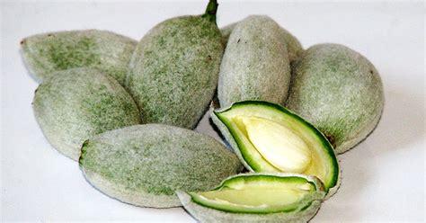 Kacang Almond Naraya 900gr 1 manfaat kacang almond atau kacang badam manfaat