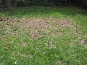 solar pest repeller the garden and rabbits