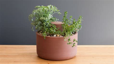 self water planter self watering planters joey roth