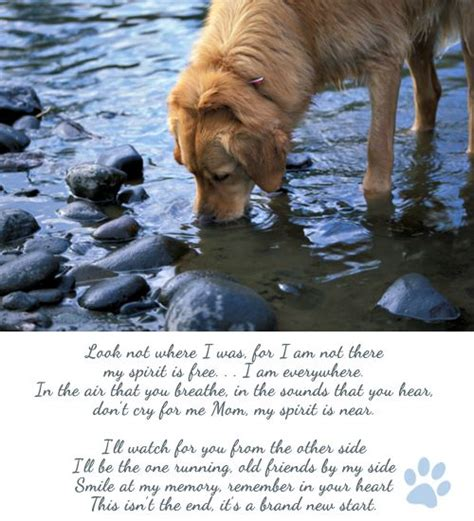 peace puppies rest in peace poem