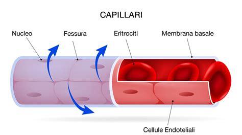 rottura vasi capillari scoperta dei capillari e diametro dei capillari