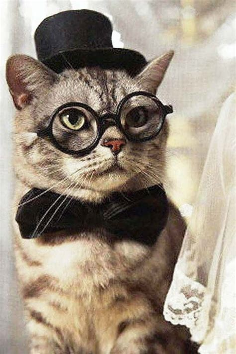 iphone wallpaper cat glasses 21 best images about cats with glasses on pinterest cats