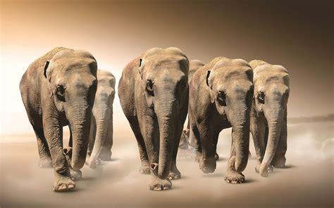 elephants   desert wallpaper hd animals wallpapers