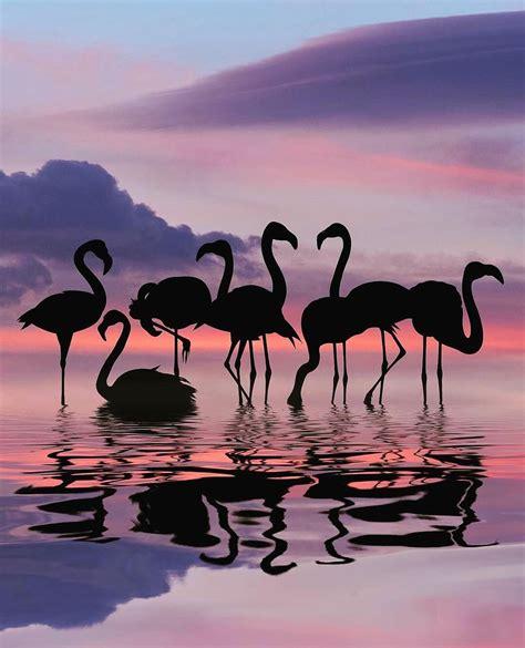 wildlifeplanet flamingo sunset our beautiful planet