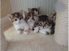 Adorable kittens for sale | Epping, Essex | Pets4Homes Kittens For Sale