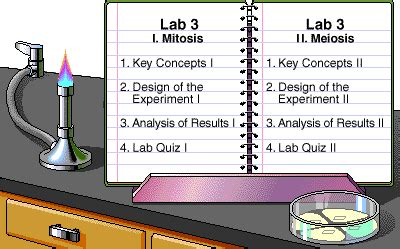 lab bench mitosis cell division worksheet pearson types of cell division