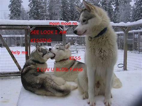 Dog Kiss Meme - image 546418 moon moon know your meme